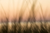Reed Abstract 2