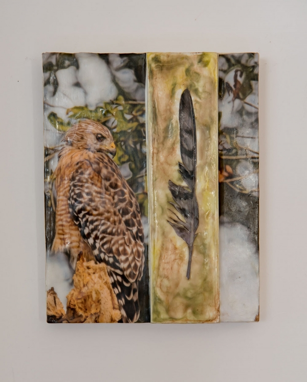 Untitled Red Shouldered Hawk