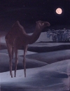 Camel in Moonlight