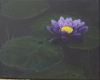 Violet Water Lilly