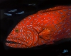Red Neon Grouper Fred-SOLD