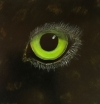 Eye of the Panther (Sold)
