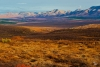 The Tundra of Northern Denali