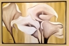 Soothing Calla Lilies